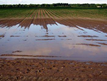 Ground Water Issue: Light Nonaqueous Phase Liquids